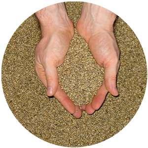 Tip 2 şeker hastaları için bitkisel bir ilaç - Çemen otu tohumu
